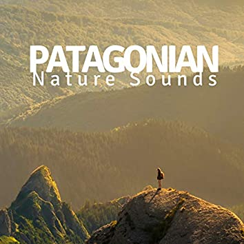 2018 Patagonian Nature Sounds