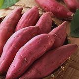 Planta flor fruta semilla 1 bolsa de semilla de patata dulce rústico fácil de producir semillas frescas para el jardín - semillas de patata dulce