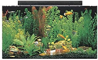 acrylic tanks for sale