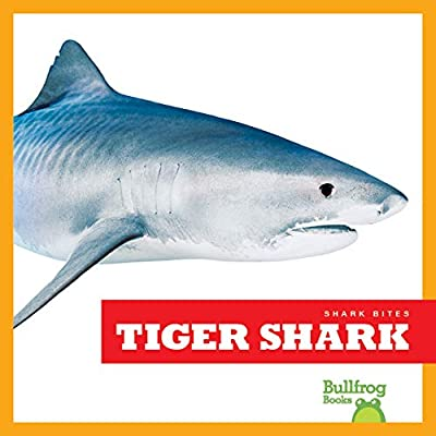 Tiger Shark (Bullfrog Books: Shark Bites)