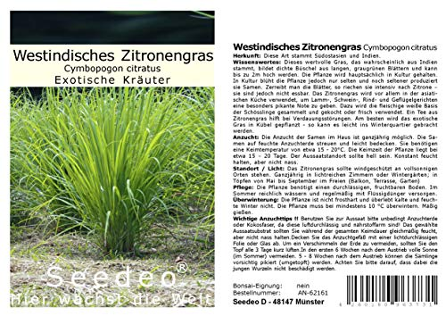 Seedeo Lot de 200 graines de citronnelle Cymbopogon citratus