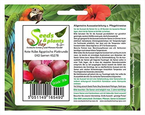Stk - 30x Rote Rübe Ägyptische Plattrunde EKO Gemüsesamen Saatgut Samen Frisch KS278 - Seeds Plants Shop Samenbank Pfullingen Patrik Ipsa
