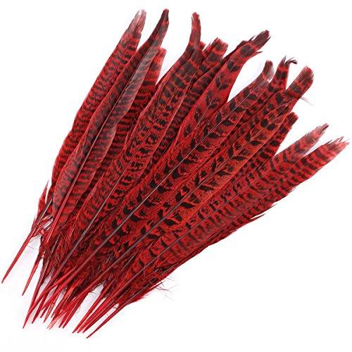 Surepromise 20 STK Fasanenfedern 25-30cm Fasan Feder Rot Echte Vogelfeder Schmuckfedern Hutfeder Hutschmuck