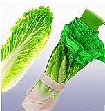 Kangkang @ Fashion and Fresh Simulation Cabbage Lettuce Umbrella Umbrella Fold Thirty Percent Creative The Sun Umbrella