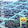 Mariani Dried Wild Blueberries -16oz (Pack of 1) –Antioxidant Superfood, Good Source of Dietary Fiber, Vitamins C and K, Gluten Free, Vegan, Fat Free, Cholesterol Free, Non-GMO, Resealable Bag -Healthy Snack for Kids & Adults #4