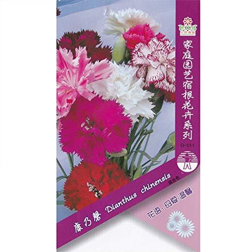 Pinkdose Nelke (gemischt) Bonsai * 1 Päckchen (Stück) * Dianthus caryophyllus * Blütenpflanze Bonsai * Winterharte Staude: 1 Packung