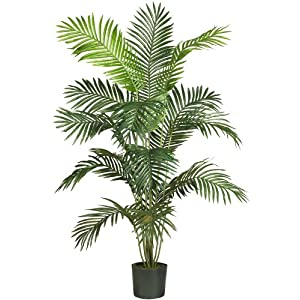 "Silk Flower Arrangements Nearly Natural 5260 Paradise Artificial Palm Tree, 5.5-Feet, Green,72"" x 9"" x 9"""