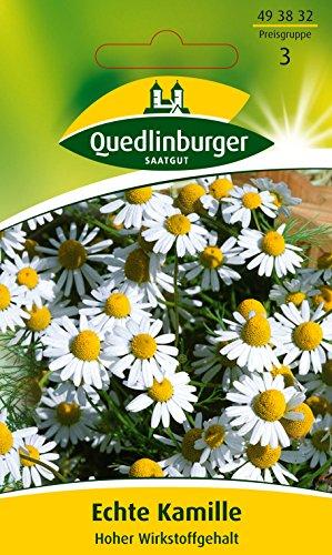 Echte Kamille Hoher Wirkstoffgehalt (Matricaria chamomilla) -