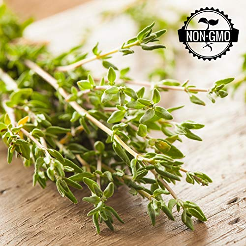 Gaea's Blessing Seeds - Organic Thyme Seeds 500+ Non-GMO Seeds Heirloom Herb Thymus Vulgaris