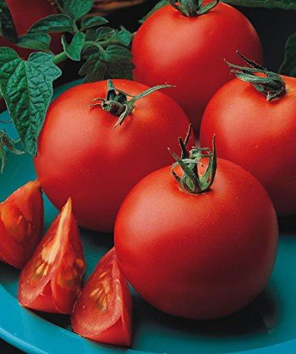 Just Seed Gemüse Tomate Matina 35 Samen
