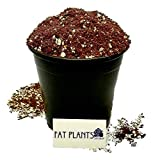 Fat Plants San Diego Premium Organic Cacti and Succulent Soil with 8...