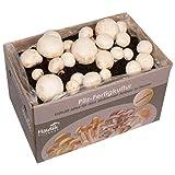 Hawlik - Set de cultivo de setas de campeón blanco - Cultura para cultivar uno mismo - Recoge setas frescas