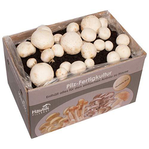 Hawlik Pilzbrut - das Orginal - weiße Champignon Pilz-Zuchtset - Kultur zum selber züchten - frische Pilze ernten (Klein)