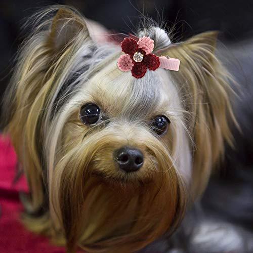 Kit de Aseo de Mascotas 10 / Lote Accesorios para Perros de Aseo de Mascotas, Accesorio para el Pelo de Mascotas, para la Competencia de Caminar al Aire Libre