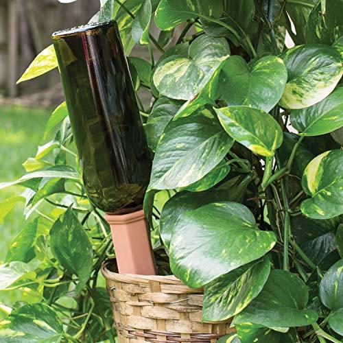 Maxam Plant Pals by Wyndham House - Juego de 6 estacas de ...