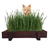 Cat Grass for Indoor Cats Kit with Rustic Wood Planter, Certified Organic Seeds, Soil, Water Spray Bottle and Easy to Follow Instructions. 100% Guaranteed to Grow.