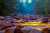 Swift River with Yellow Reflections in Autumn White Mountains, New Hampshire 9013118 (Giclee Gallery Print, 16x24, Wall Decor Travel Poster)