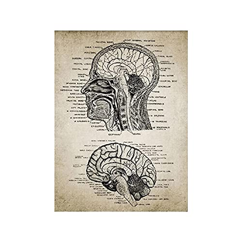 Vintage Humano Cabeza Y Cerebro Anatomía Poster Neurociencia Humano Anatomía Lienzo Pared Pintura Doctores Oficina Médicos Educación Arte Decoracion 60x80cmx1 No Marco