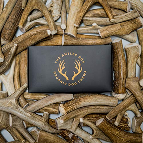 The Antler Box Premium Deer Antler Dog Chews (1 lb. Bulk Pack)-Long Lasting Organic Chewing Toys Sourced from Naturally Shed Antlers in The USA (Deer, Large (3 to 4 Antlers/lb.))