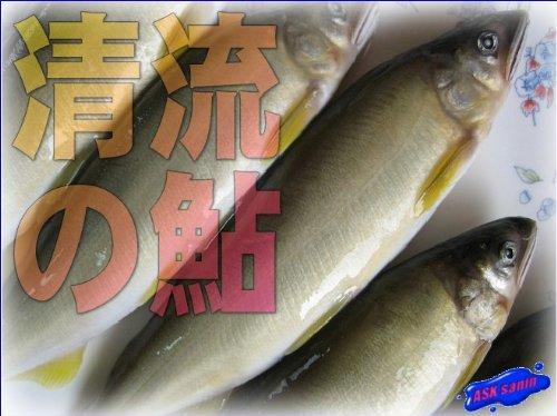 美味です!!「清流の鮎1kg」-特大サイズ10−13匹入り