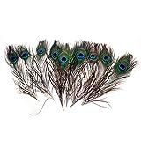 PPX 10 Piezas Plumas del Pavo Real con los Ojos Naturales Altas Plumas de Cola del Pavo Real de la Calidad para la Decoración, 25-30cm