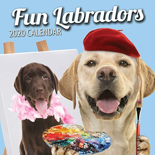 Fun Labradors 2020 Labrador Wall Calendar (2020)