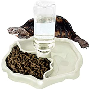 Wingoffly Automatic Reptile Feeder
