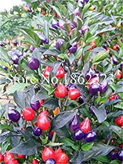 Penis Chili red hot Peter Pepper Seeds 100 pcs Vegetables Fruit Seeds The Most Funny Peppers Seeds Plants for Home garden1