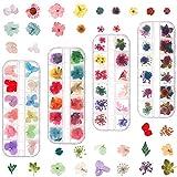 umorismo - Juego de 124 flores secas de uñas naturales para decoración de uñas en 3D
