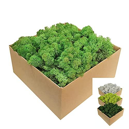Islandmoos - Moos in 1kg / 500g / 200g, versch. Farben - Echtes konserviertes Natur-Moos (Island) zum Basteln, Dekomoos für die Deko zu Ostern, Modellbau (laubgrün, 1kg)
