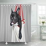 Gris pequeño Toro francés Soporte para Perros en acompañante abandonado Adoptar Solo bebé Negro decoración Cortinas de Ducha Cortina de baño con ganchos-L120xH200cm