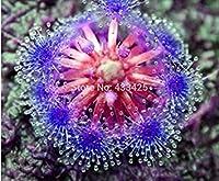 制限時間!!HOYA種子、鉢植えの花盆栽植物HOYA種子、蘭の種子Diyホームガーデン100粒子/ロット、#1回転