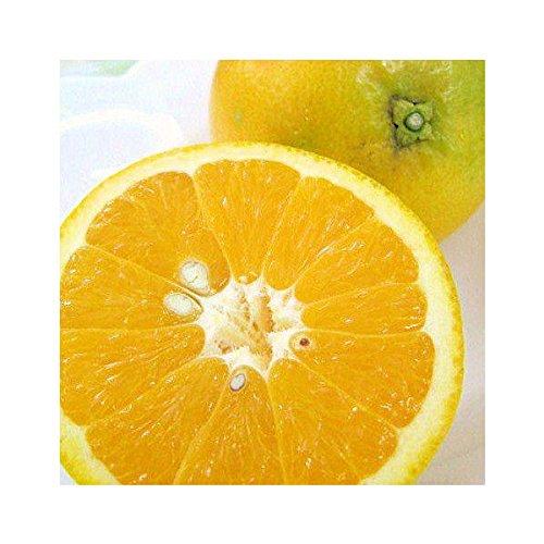 和歌山県産 バレンシアオレンジ M・Lサイズ 2kg めずらしい国産オレンジです