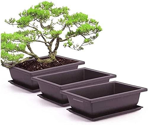 Vaso per piante rettangolari da 6 pezzi, vasi da allenamento in plastica per bonsai, vasi per piante durevoli(grande)