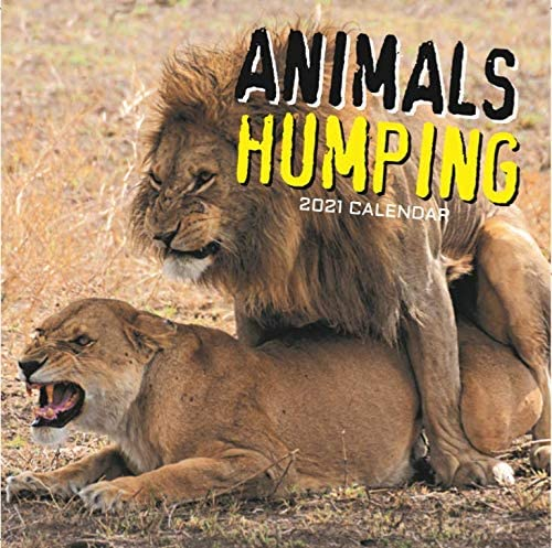 2021 Wall Calendar Animals Humping 12 x 12 Inch Monthly View 16 Month Includes 180 Reminder product image