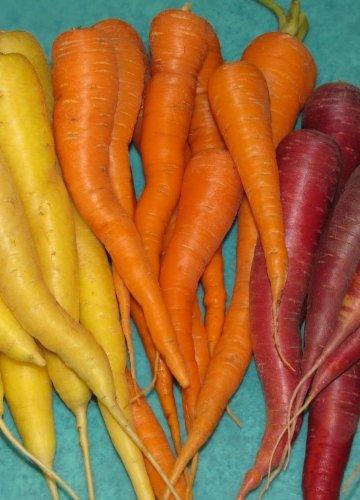 Carrot Seed Assortment- 5 Heirloom Varieties- Non-GMO