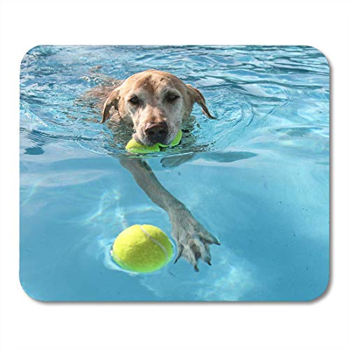 AOHOT Mauspads Yellow Labrador Dog at Local Public Pool Blue Summer Lab Ball Best Mouse pad 9.5