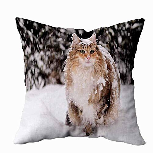 N\A Federa per Cuscino, Fodere per Federa Quadrata Gatto Norvegese Femmina in Piedi nella Neve Cuscino Decorativo per Fattoria su Entrambi i Lati