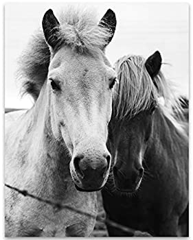 Two Horses Black and White Photo - 11x14 Unframed Print - Great Decor and Gift for Equestrians Racing Fans and Horseman Under $15