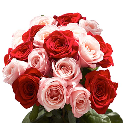 GlobalRose 50 Roses- 25 Red and 25 Pink- Fresh Flower Delivery by Saturday August 8