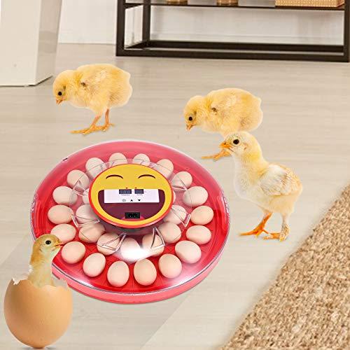 4YANG Alta eficiencia Incubadora de huevos automática 30 huevos,Giro automático Incubadora de huevos para incubar con control de temperatura / ventilación giratorio para aves, codorniz, pato