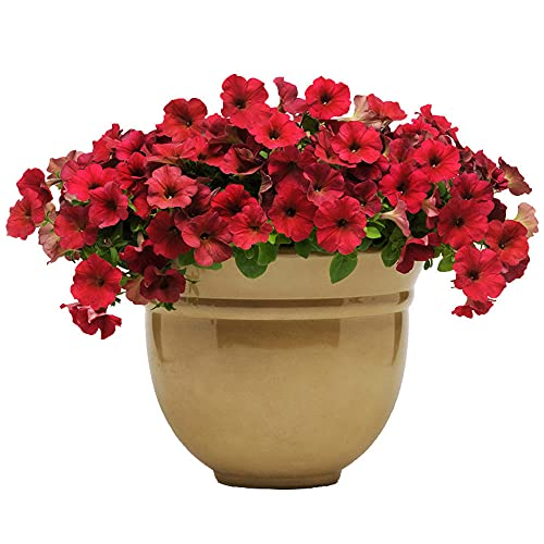 Charm4you Perenne Semi di Fiori,Semi di Fiori da Giardino di Petunia Viola 200 Pezzi,Giardino Balcone Semi di Fiori