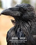 2020 -2021 18 Month Weekly and Monthly Planner July 2020 to December 2021: Black Raven - Monthly Calendar with U.S./UK/ ... 8 x 10 in.- Birds Animal Nature Wildlife