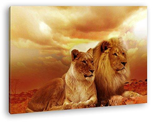 deyoli Löwen in Afrika im Format: 120x80 als Leinwandbild, Motiv fertig gerahmt auf Echtholzrahmen, Hochwertiger Digitaldruck mit Rahmen, Kein Poster oder Plakat