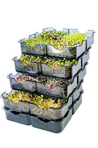 GermoglioSì Germogliatore per Semi Manuale Innovativo Professionale Multifunzione Brevettato a 5 vassoi in plastica 100% riciclabile con Certificazione Moca