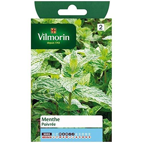 Vilmorin - Sachet graines Menthe poivrée