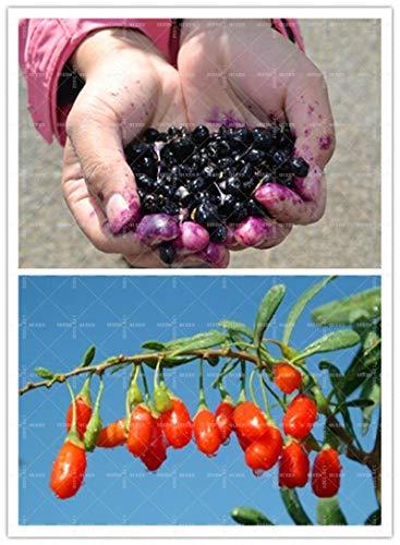 Förderung !!! 200pcs / Bag Goji Seeds Goji Beere Bocksdorn Lycium Chinense ningxia Kräutersamen für Hausgarten Nutzen für die Gesundheit Mispel