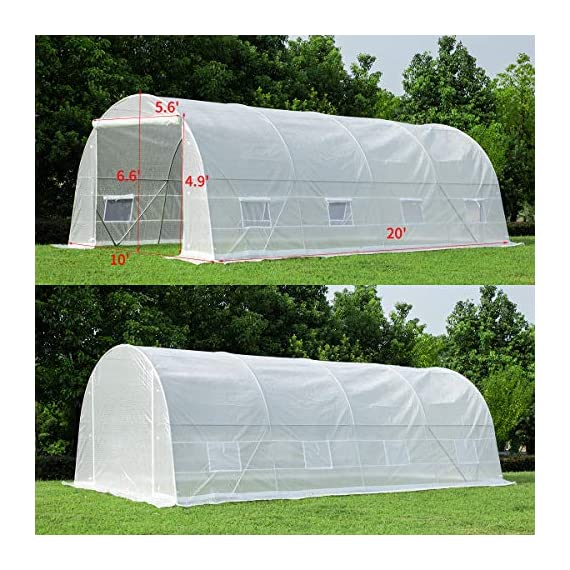 MELLCOM 20' x 10' x 7' Greenhouse Large Gardening Plant Hot House Portable Walking in Tunnel Tent, White 8 【8 ROLL-UP SIDE WINDOWS】-The green house eight roll-up windows have mesh netting to allow for cross ventilation and climate control. 【HEAVY DUTY STEEL FRAME】-Walk-in Garden Greenhouse solid steel construction with a galvanized finish, which is resistant to rust, chipping, and peeling. 【TRANSPARENT PLASTIC COVER】-The tough, durable and transparent PE plastic cover protects plants while allowing nourishing sunlight to pass through. The cover can be easily attached to the frame with the included tethers and single-sided tape.