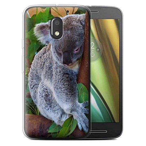 Custodia/Cover/Caso/Cassa Gel/TPU/Prottetiva STUFF4 stampata con il disegno Animali selvatici per Motorola Moto E3 2016 - Koala