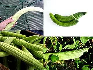 Best armenian cucumber seeds Reviews